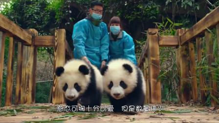 世界上仅此一只,被发现在陕西,现在在动物园