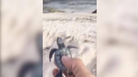 小海龟刚刚被好心人送回大海就...o(TヘTo)