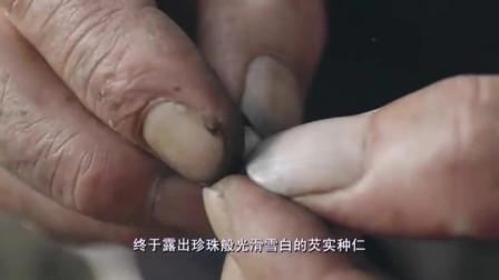 老广的味道:这种浑身长刺的植物成为肇庆人的小零食,瓦片上烘焙香脆可口