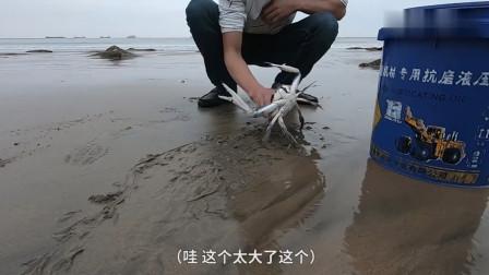 赶海小哥在石头缝中抓到了半桶值钱海货,被游客疯狂砍价50块出售
