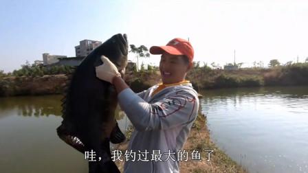 赶海小哥用活鱼做饵,钓获了一条26斤重的石斑鱼,价值1000多块