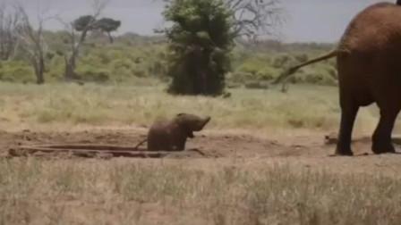 直升机救援队救援陷落蓄水池中的小象,小象和妈妈在一起团聚很开心
