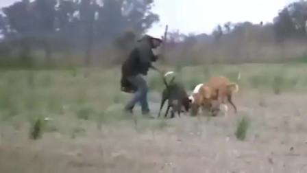 5只训练有素的灰犬追杀一只兔子,主人扔水瓶直接秒杀!全场最佳
