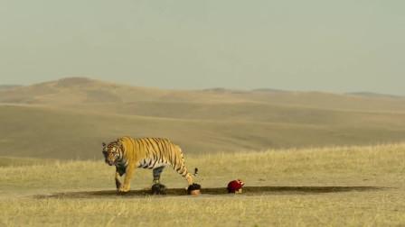 保险公司打来电话,大叔竟然问被老虎吃了赔多少,真是太逗了!