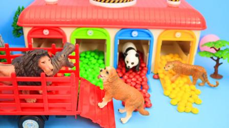 藏在彩虹屋里动物们 让我们一起把它们找出来吧