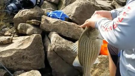 """野外河坝下钓鱼,水急鱼也大,这""""条纹状""""的鱼叫什么"""