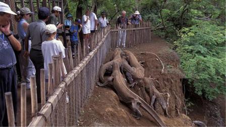 印度村子出現奇怪生物,村民好奇圍觀,專家一看趕緊讓人撤離!