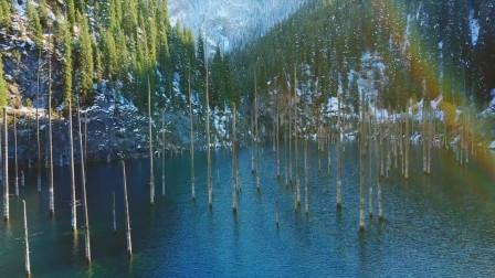 树木倒着长的自然景观你见过吗