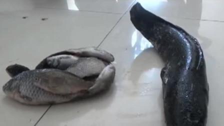 北京2男子河道电鱼,民警赶往现场2人已获捕获11条鱼,被刑拘