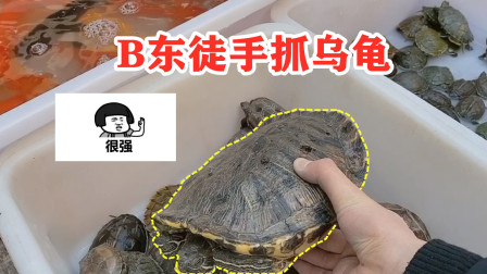 B东vlog:B东徒手抓乌龟,还买了一个水族箱给它住!