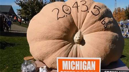 世界上最大的3个瓜,316斤的西瓜都不算什么