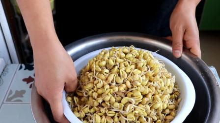 农村媳妇教你在家生豆芽,不加催生剂,安全健康,方法超简单