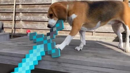 我的世界动画-狗狗玩MC-Louie