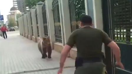 国外一只棕熊越狱出逃,被男子一脚踹到了墙上,棕熊的反应亮了