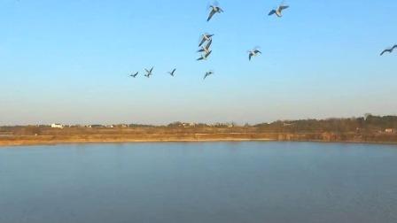 候鸟季到来 冬日湿地别样美  新安夜空 20191207 高清版