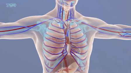 解剖学与生理学(3D动画):令人惊叹的3D宏观和微观层次上的人体
