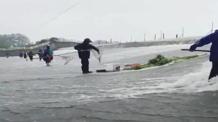 村里的大河涨水了,没想到上游水库里的大鱼全都被冲了下来,全村人都跑来捕鱼!
