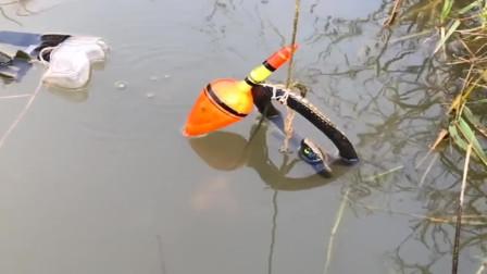 农村小伙来河边钓龙虾,没想到还真有收获,午餐就吃它了!