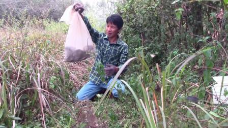 几十块钱一斤的野味,小乐一次就装到满满一袋子,收入真不错