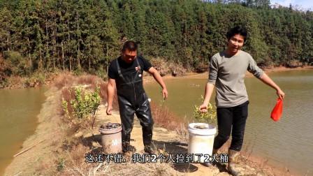 小邓放水干鱼塘,到处都是这种野货,半个小时捡了2大桶,有口福了