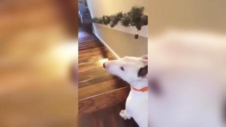 狗子:我就是这样不同寻常!