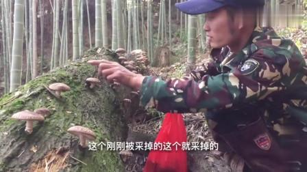 农村小伙山里搞野味在树桩采获野生香菇,满满一箩,简直太幸运了