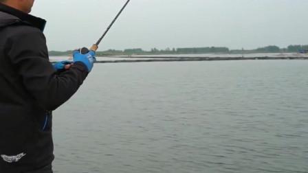 眼镜哥水库路亚,半个人这么长的鲈鱼,这个拉锯战可就过瘾了