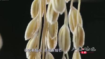 老广的味道:香米和其他水稻略有不同,在日光作用下,香味得到最大程度的释放