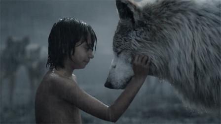 小男孩为了给狼王报仇,用智慧打败老虎,一部奇幻电影!