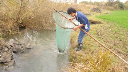 水流湍急的大水沟,小伙利用大网制作拦截陷阱,收获很惊喜