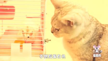 猫咪帮仓鼠偷吃主人胡萝卜,没想到被主人发现了,结局太甜了!