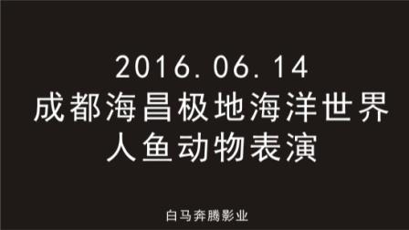 2016.06.14成都海昌极地海洋世界视频游记(人与动物表演)