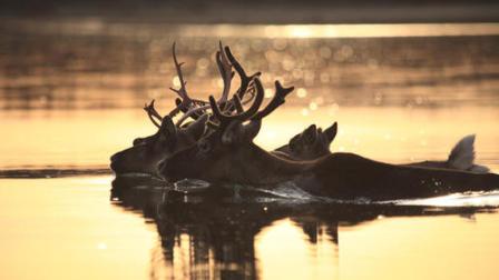 《最美中国 大有可观》 第十一集 敖鲁古雅 使鹿部落