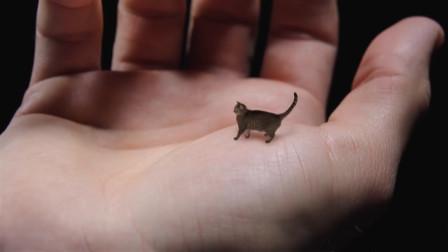 这只猫咪体长仅有7厘米,体重不足3斤,活到6岁就死了