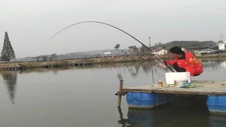 农村小伙在鱼塘大战青鱼,看这大弯弓就知道是条大货,鱼竿质量真不错!