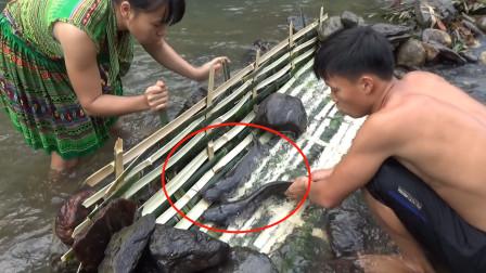 农村小俩口在小溪边编竹栏抓鱼,2条大鲢鱼很快到手,技术太棒了