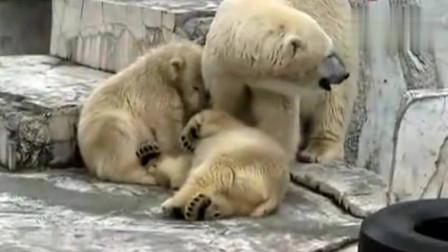 打雷吓着熊宝宝了,急忙跑到妈妈的身边