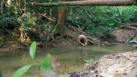 单挑荒野:德哥的脚伤受到感染了,可小河还是让他兴奋