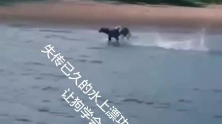 失传已久的水上漂功夫,让一条狗学会了