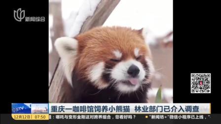 无可奉告?重庆一咖啡馆饲养小熊猫,林业部门已介入调查