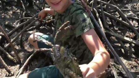 外国小男孩赶海,红树林里全是巨无霸螃蟹