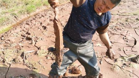 大叔去鱼塘搞野,发现一个洞估计有黄鳝,没料挖开后抓到根本不是黄鳝