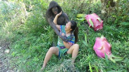 荒野少妇,水边洗澡,发现好多火龙果,碰到森林人赶紧跑,火龙果被偷吃