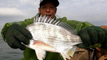 阿雄跟阿烽出海抓虾,结果大虾都跑阿烽网上了,还好有大鱼来救场