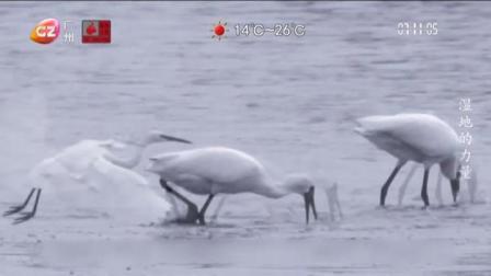 广州早晨 2019 中国广州国际纪录片节关注环境保护
