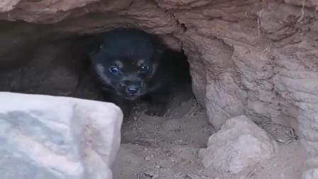 山里采药发现洞里有条流浪狗,农村小媳妇赶紧把家里的面条端来给它吃,太善良了!