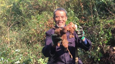 老爷爷经常去山里挖药材,小的才4块钱一斤,多多少少能赚点