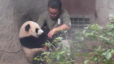 看奶爸心情不好, 熊猫默默地陪在他身边