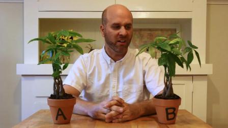 男子每天对植物A夸赞,对植物B说脏话,一个月后差距如此明显