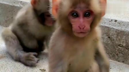 两只可爱小猴宝宝,猴妈妈在哪